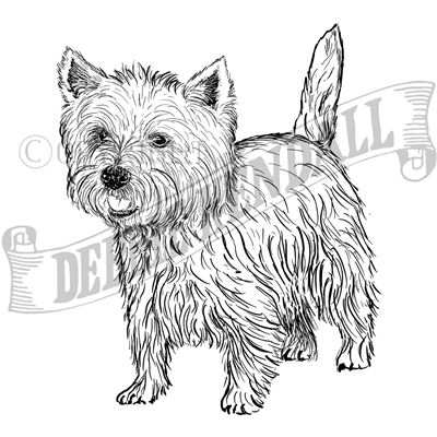 You can order this West Highland White Terrier