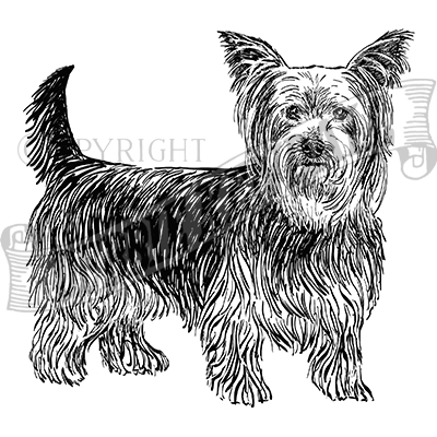 You can order this Yorkshire Terrier