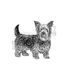 Yorkshire Terrier Rubber Stamp