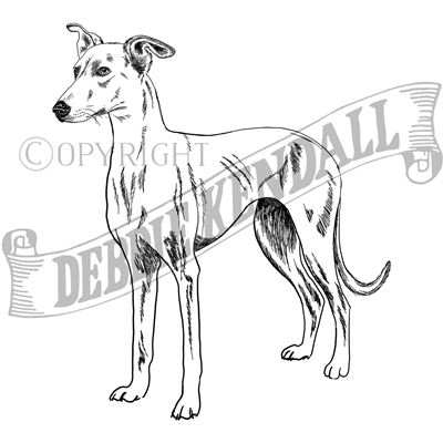 You can order this Lurcher (Smooth Coated)