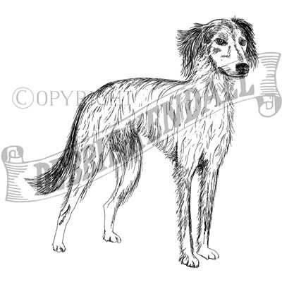 You can order this Lurcher (Long Haired)