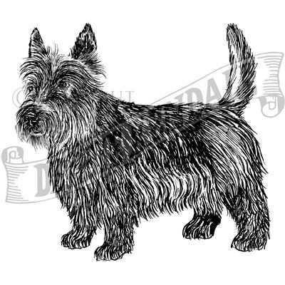 You can order this Scottish Terrier