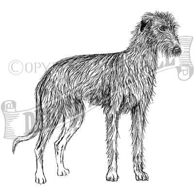 You can order this Lurcher (Wire Haired)