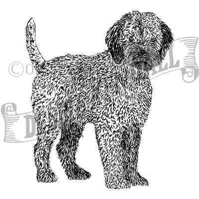 You can order this Lagotto Italiano