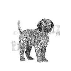 Lagotto Italiano