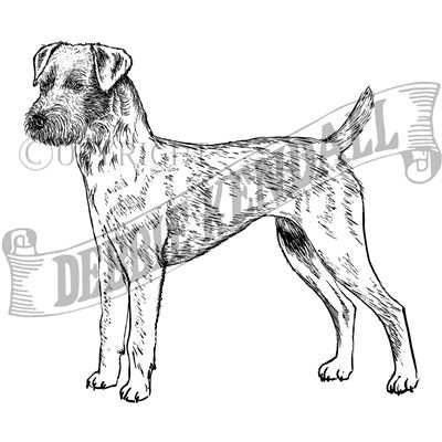 You can order this Patterdale Terrier