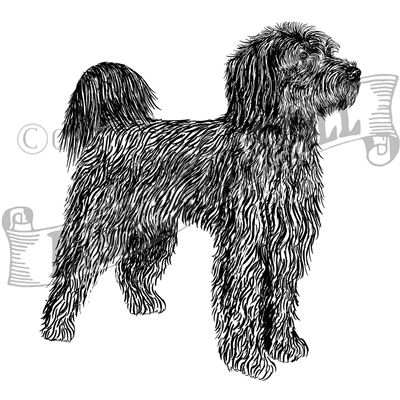 You can order this Portuguese Water Dog