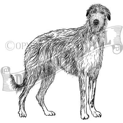You can order this Deerhound