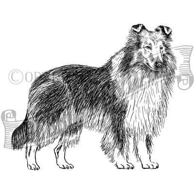 You can order this Rough Collie