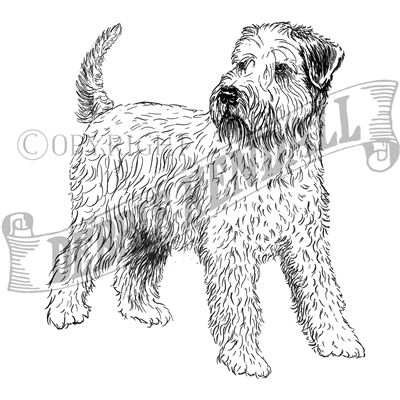 You can order this Wheaten Terrier