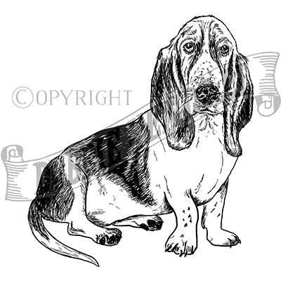 You can order this Bassett Hound
