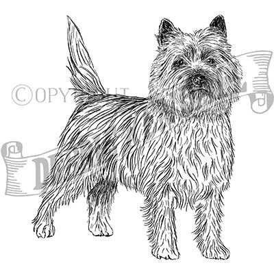 You can order this Cairn Terrier