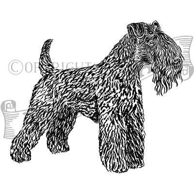 You can order this Kerry Blue Terrier