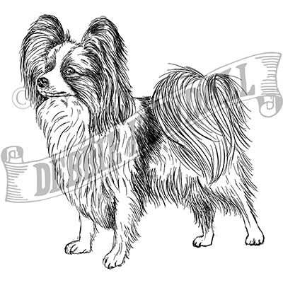 You can order this Papillon