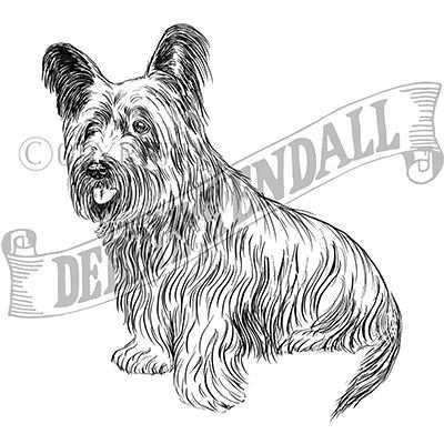 You can order this Skye Terrier