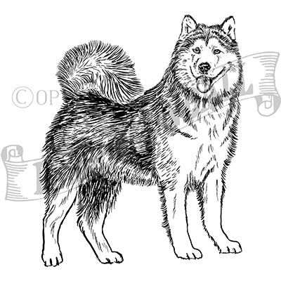 You can order this Alaskan Malamute