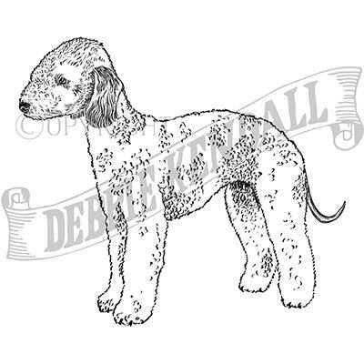 You can order this Bedlington Terrier