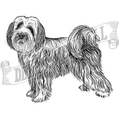 You can order this Tibetan Terrier