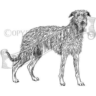 You can order this Scottish Deerhound