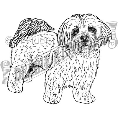 You can order this Lhasa Apso