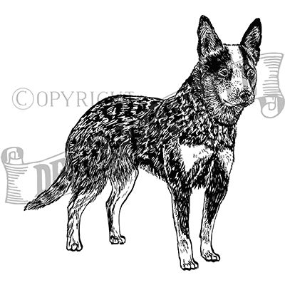 You can order this Australian Cattle Dog