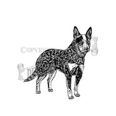 Australian Cattle Dog Personalised Stamp