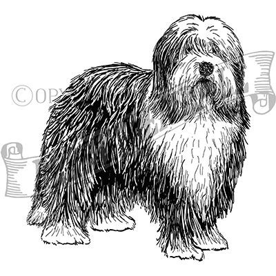 You can order this Bearded Collie