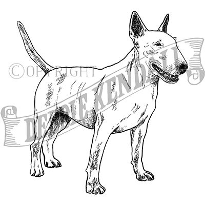 You can order this Bull Terrier