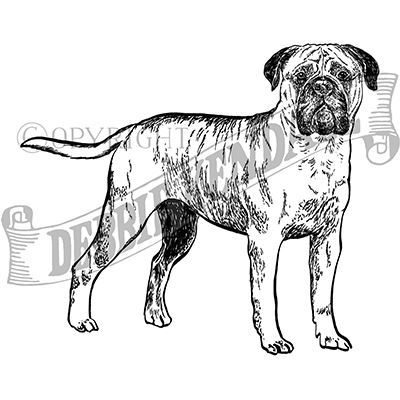 You can order this Bullmastiff
