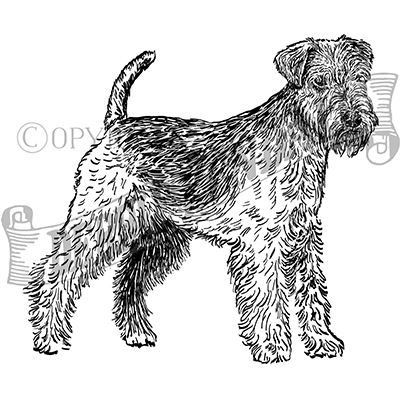 You can order this Lakeland Terrier