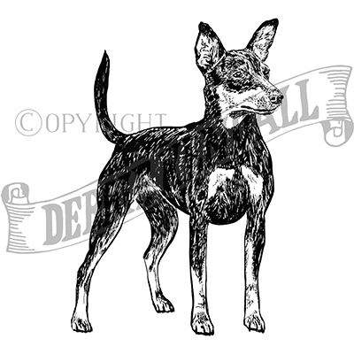You can order this Miniature Pinscher