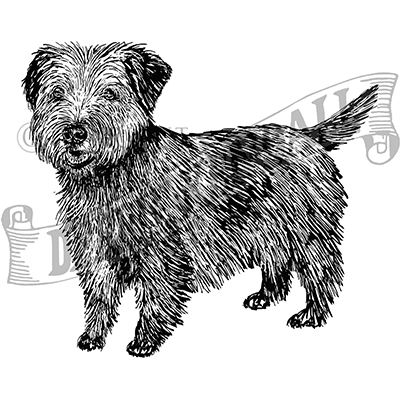 You can order this Norfolk Terrier