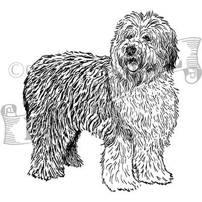 You can order this Old English Sheepdog