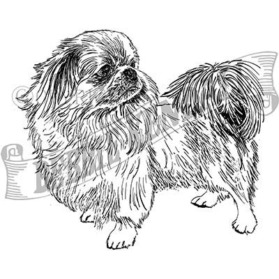 You can order this Pekingese
